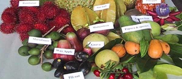 Frutas tropicales, descúbrelas!