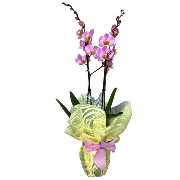 planta-orquidea-lila-01