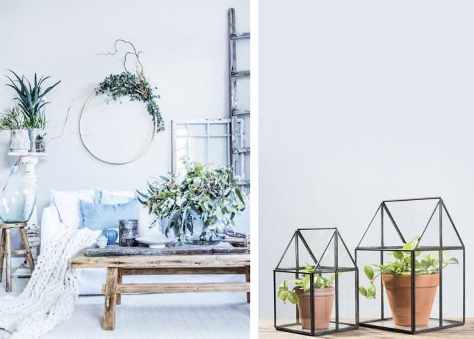 Salon plantes