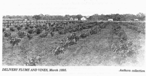 Lyrup 1895: vines under irrigation