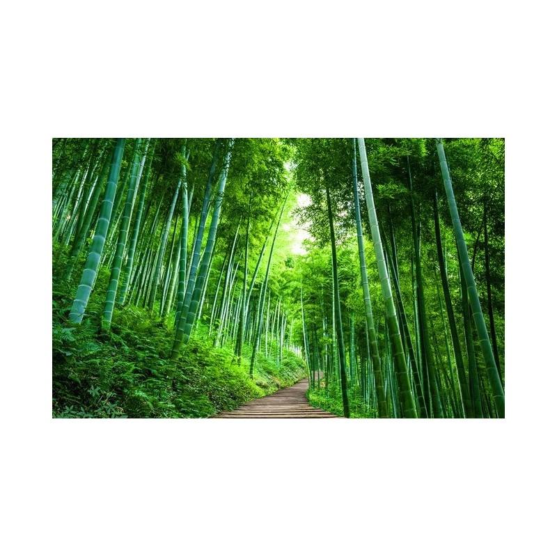 tapisserie zen papier peint photo paysage personnalis effet 3d chemin dans la foret de bambou
