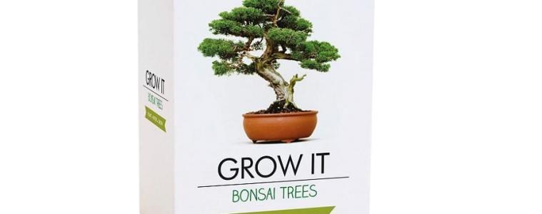 Kit bonsaï