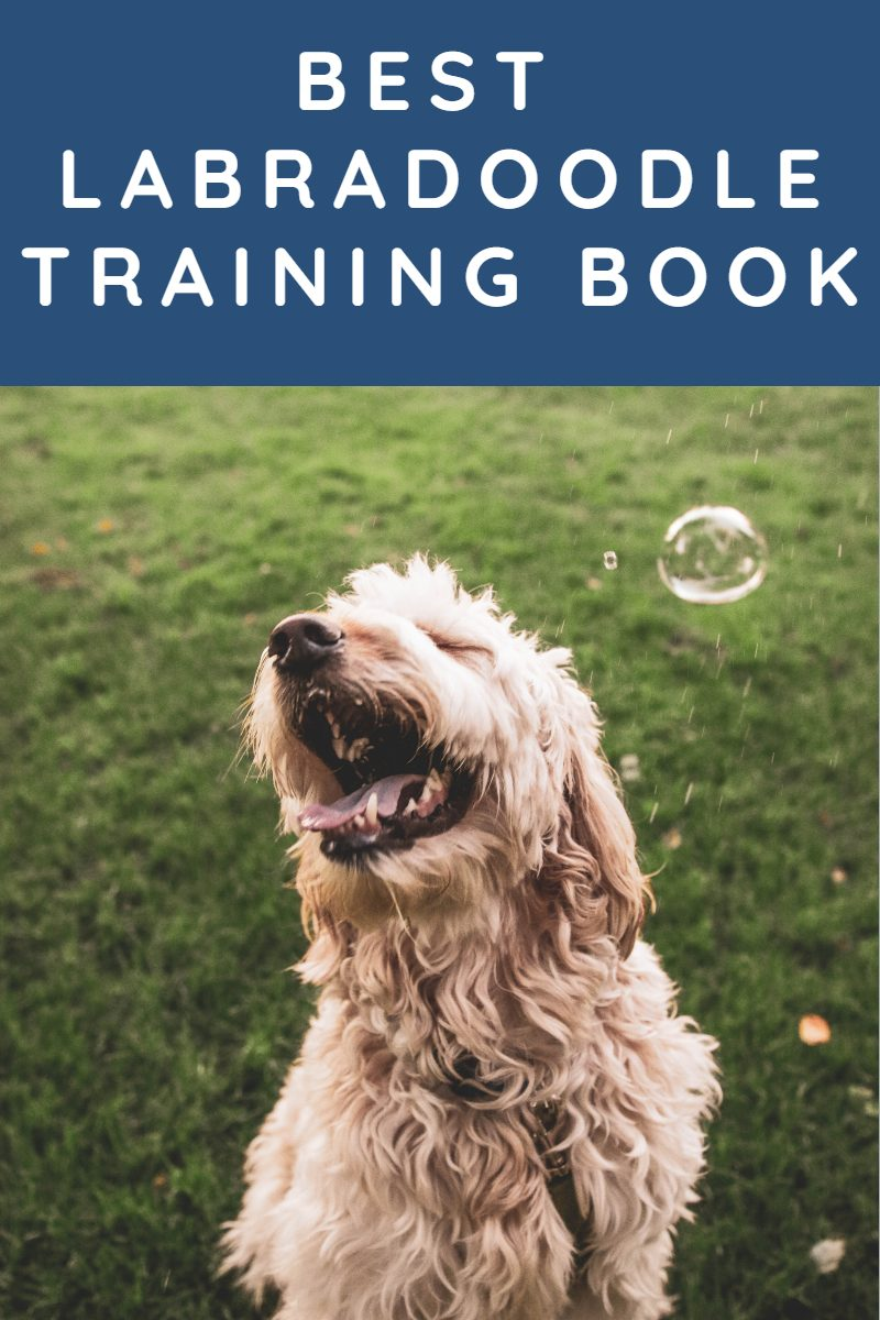 BEST LABRADOODLE TRAINING BOOK