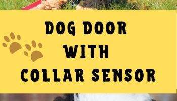 Best Dog Door With Collar Sensor