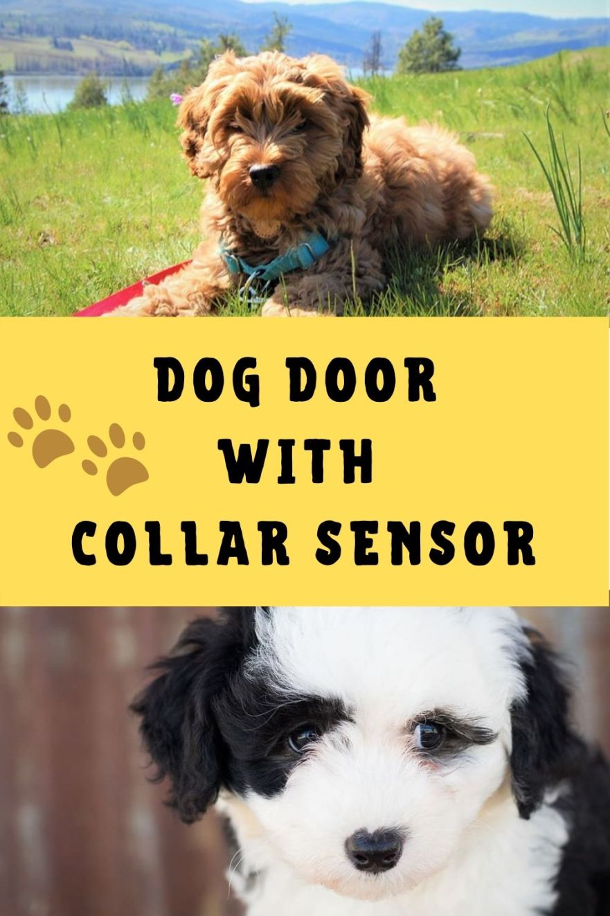 Best Dog Door With Collar Sensor