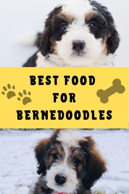 best food for bernedoodles