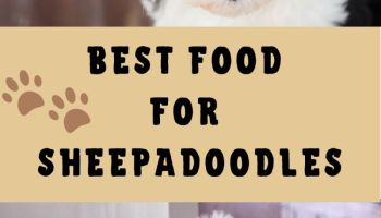 best food for sheepadoodle