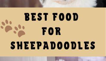 best food for sheepadoodle