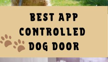 Best app controlled dog door