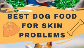 Best dog food for skin problems