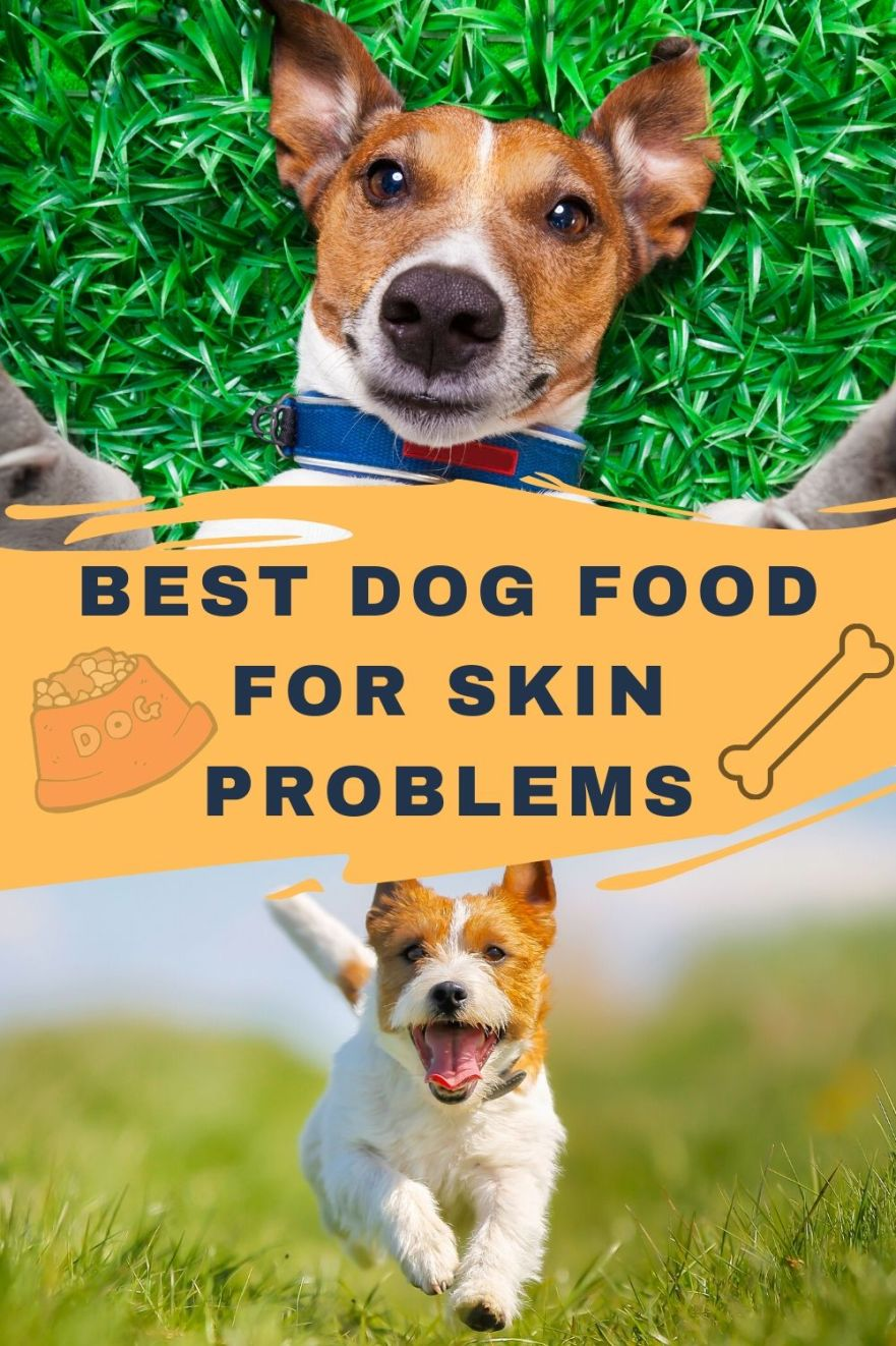 Best dog food for skin problems