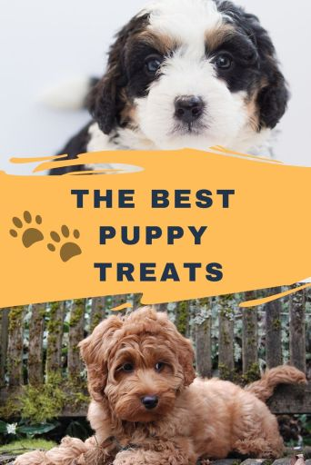 Treats for puppies under 3 months