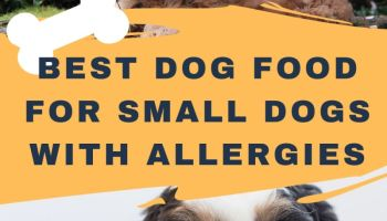 best dog food for small dogs with allergies