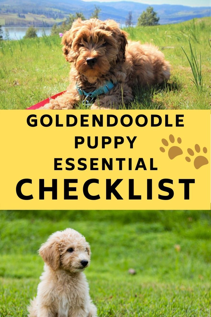 New Goldendoodle Puppy Checklist