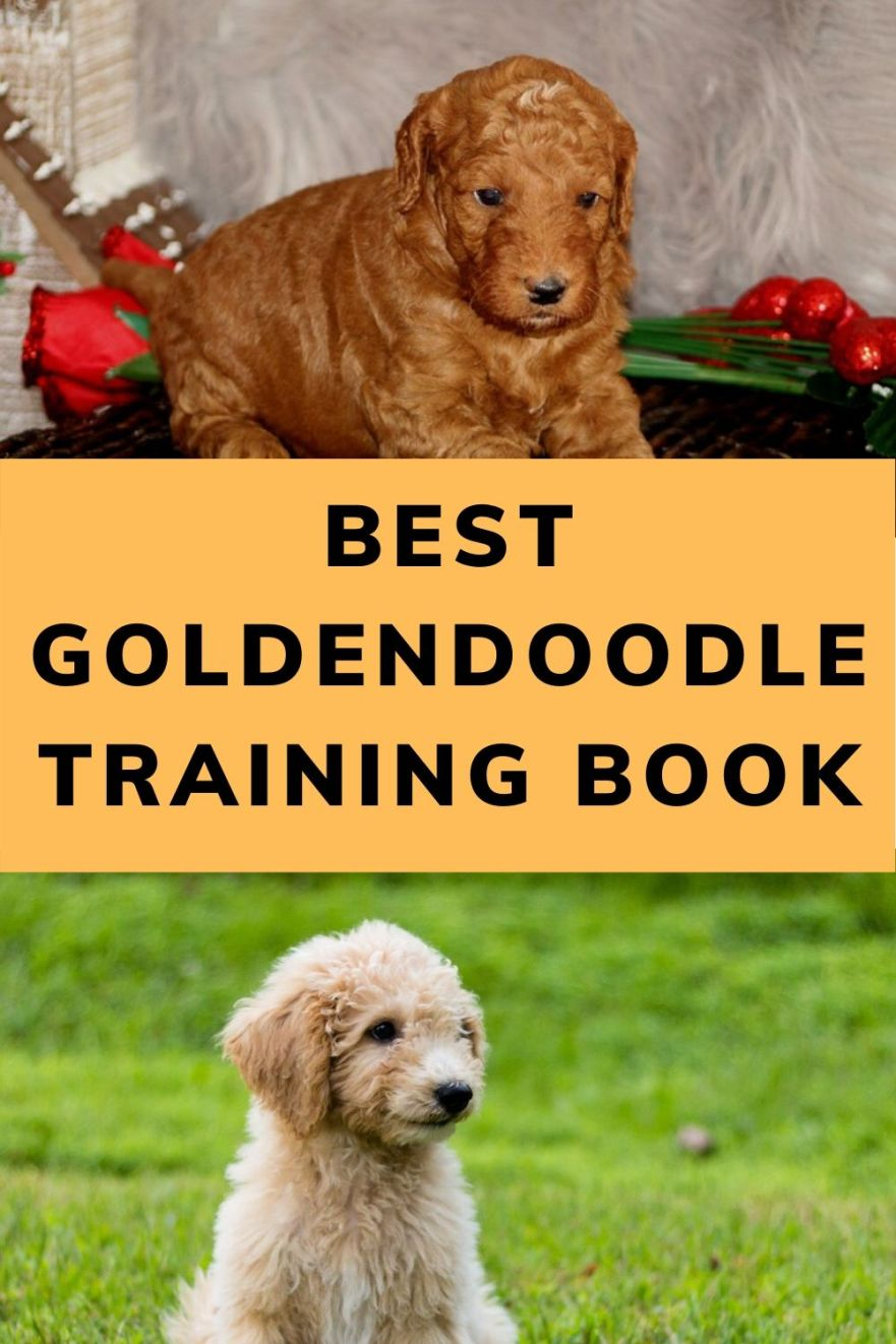 Best Goldendoodle Training Book