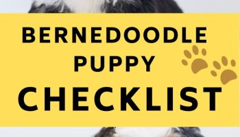 bernedoodle puppy checklist