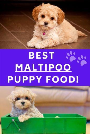 Best maltipoo puppy food