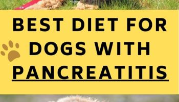 Diets For Dogs With Pancreatitis
