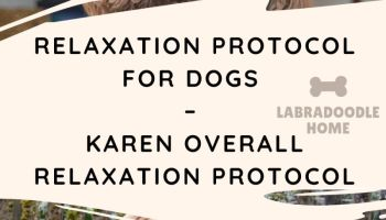 Relaxation Protocol For Dogs – Karen Overall Relaxation Protocol