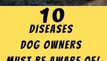 10 Diseases Dog Owners Should Be Aware Of