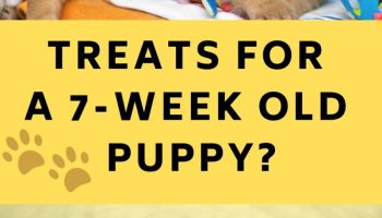 Can I Give My 7-Week Old Puppy Treats