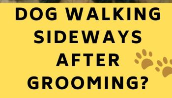 Dog Walking Sideways After Grooming Dog Behaviour after Grooming