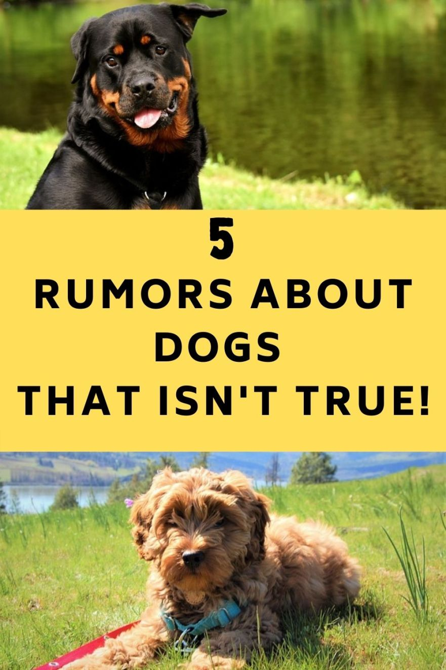Rumors About Dogs You Shouldn't Believe