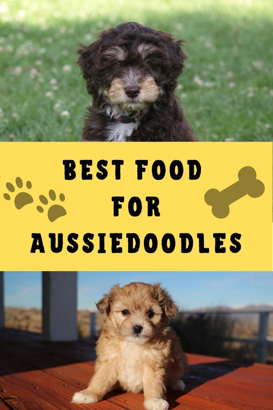 Best Food for Aussiedoodles