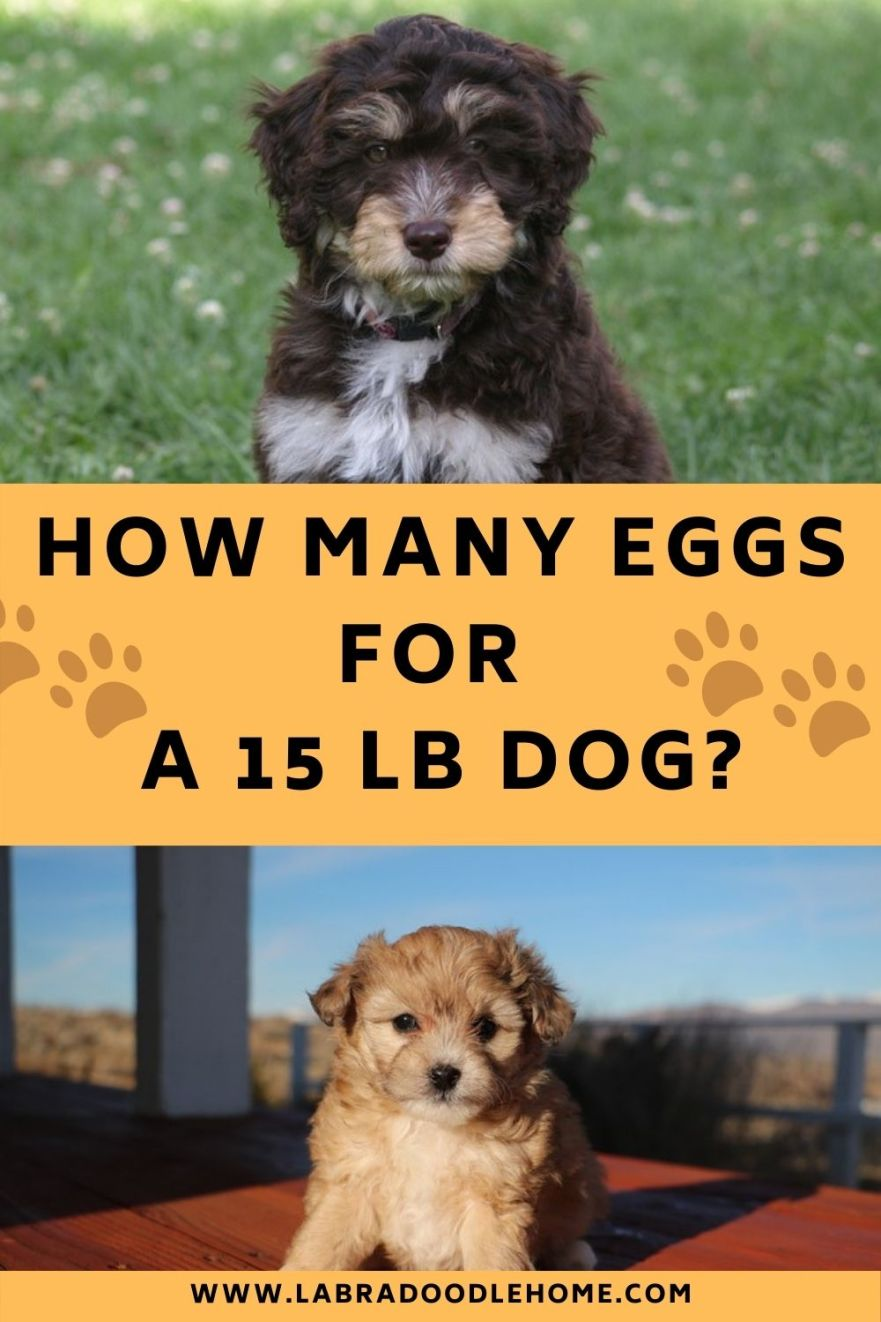 How Many Eggs For A 15 LB Dog