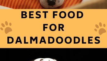 BEST FOOD FOR DALMADOODLES