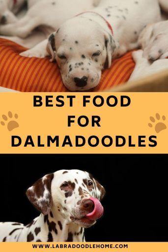 BEST FOOD FOR DALMADOODLES