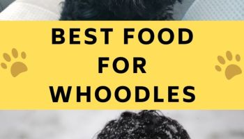 best food for whoodles