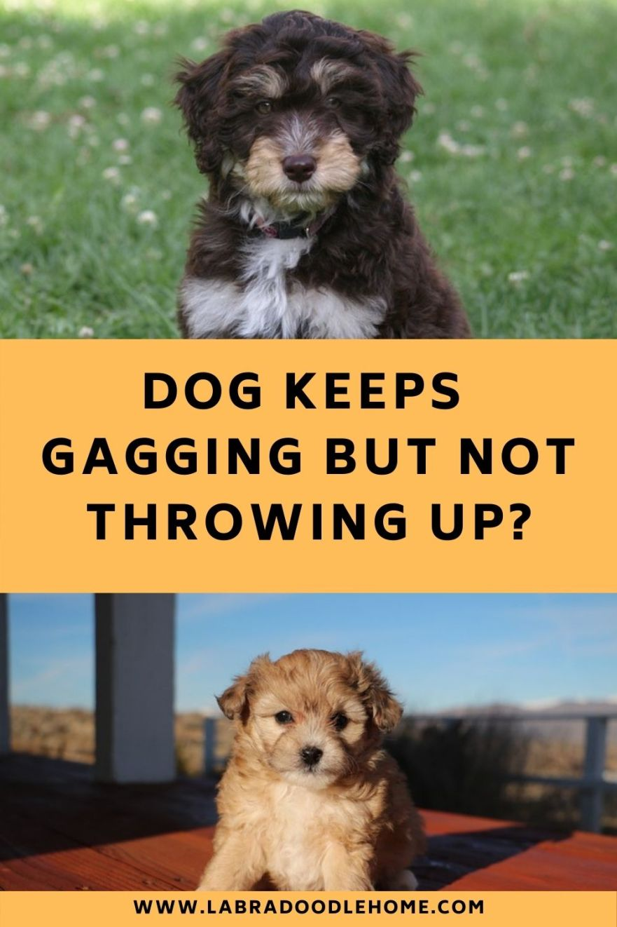 dog keeps gagging but not throwing up