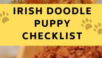 irish doodle puppy checklist