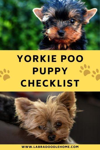 yorkie poo puppy checklist
