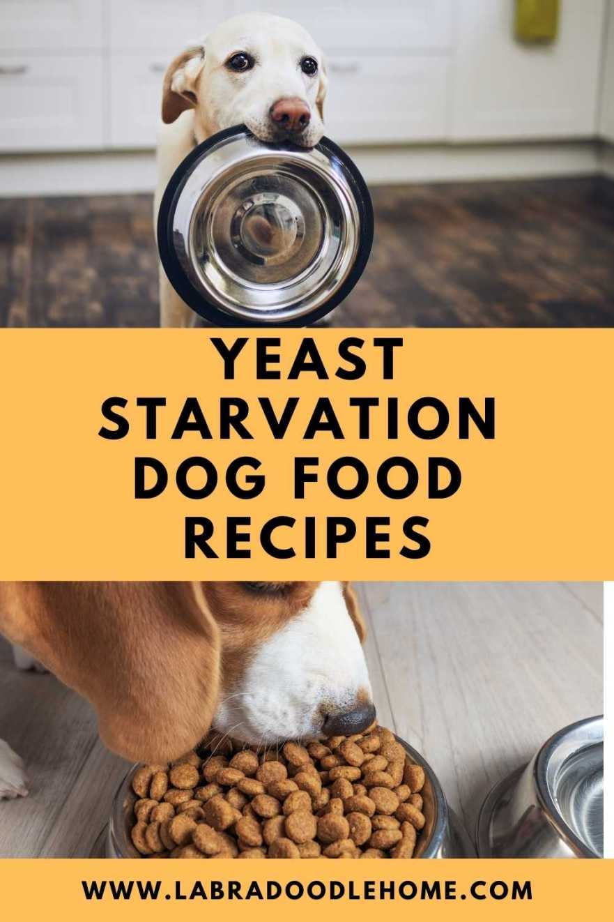 Yeast Starvation Dog Food Recipes