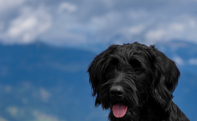is pea gravel safe for dogs