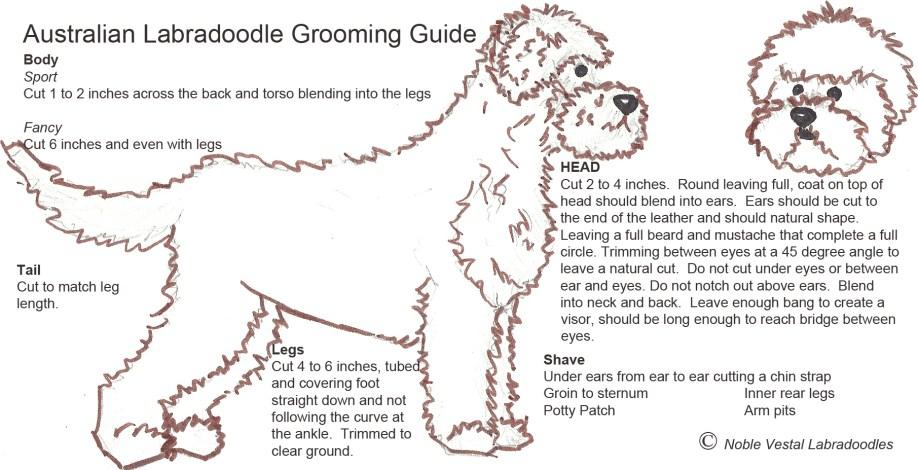 Grooming_Diagram copy 2