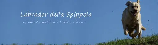Links allevamento labrador retriever della spippola