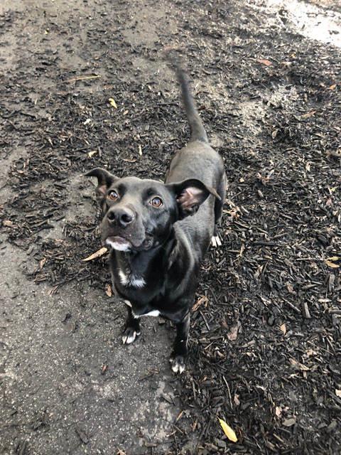 Homeless Labrador Rescue - Resume Examples | Resume Template
