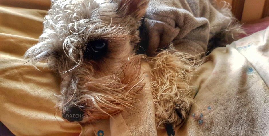 Cómo Prevenir Que tu Mascota se Enferme en Época de Frío
