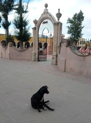 v reyes-perros-2