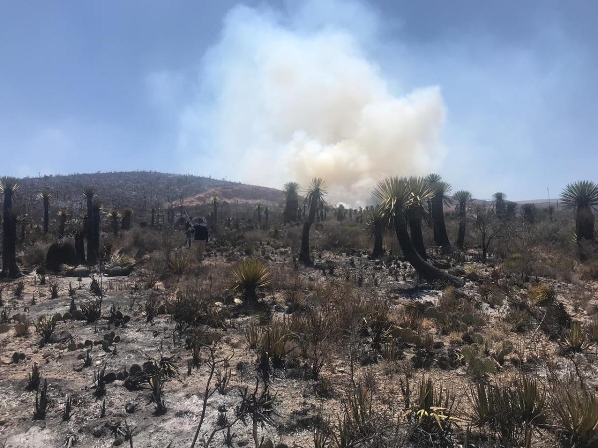 Por Sofocar Incendio en San Nicolás Tolentino: Protección Civil