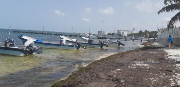 Sargazo en Quintana Roo 2