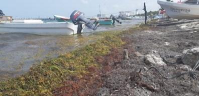 Sargazo en Quintana Roo 7