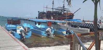 Sargazo en Quintana Roo 8