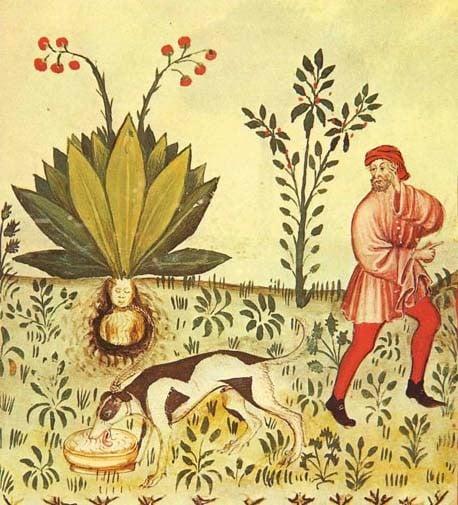 Resultado de imagen de Plantas Mágicas
