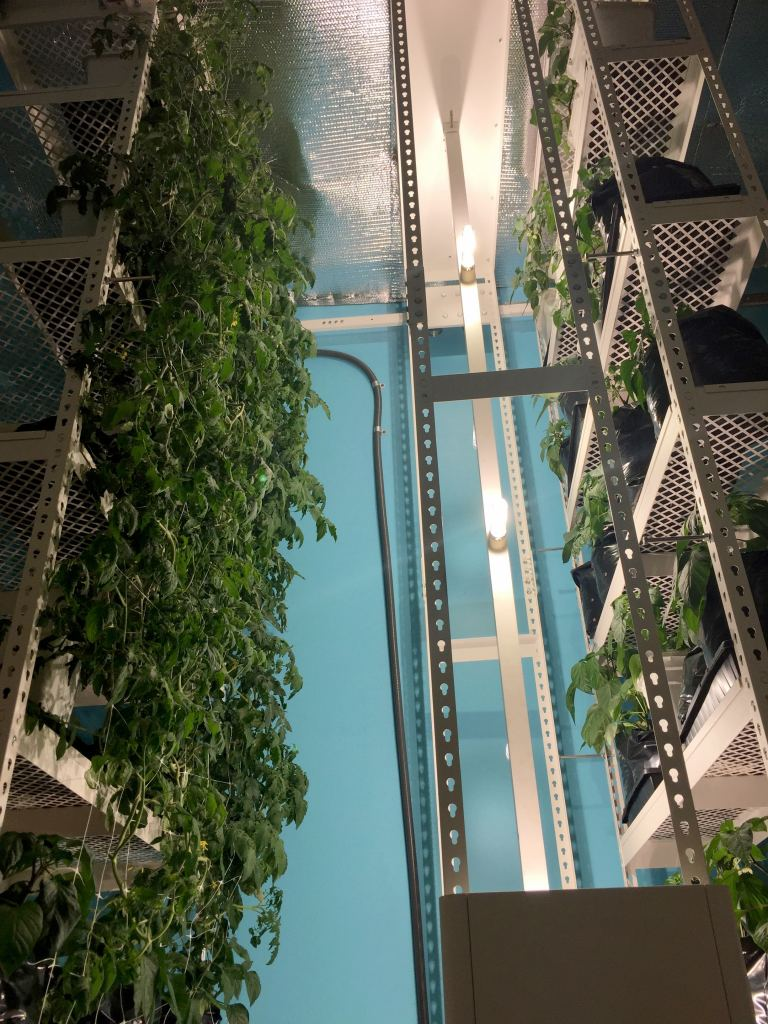 View of vertical marijuana growing system