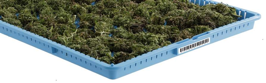 Drying racks for marijuana