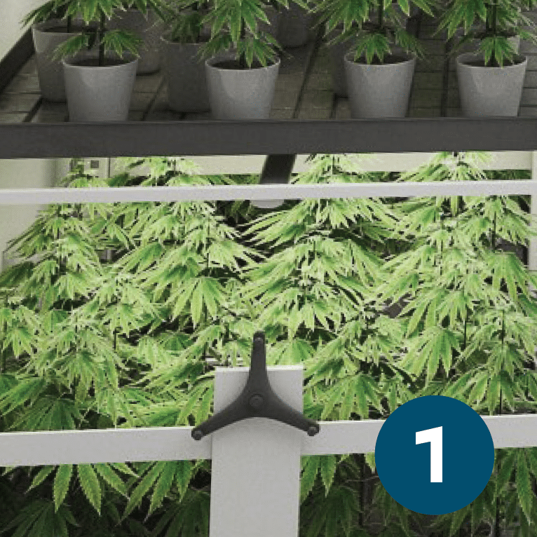 Commercial Grow Accessories: Cannabis Vertical Growing